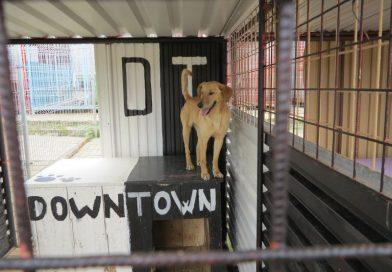 Návšteva v psom útulku